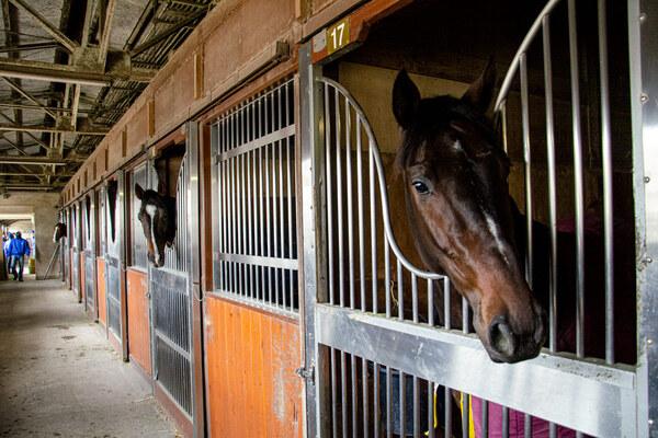 競走馬厩舎の一例