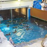 【2021年4月26日更新】東京・大阪・京都・兵庫のテーマパークと動物園・水族館の開園・開館時間変更情報