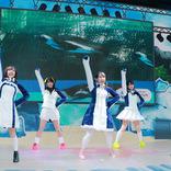 けもフレからペンギンさん大集合『PPP ONLINE LIVE~世界ペンギンの日大感謝祭~』公式ライブレポート到着