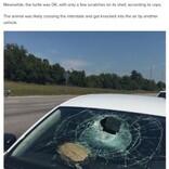高速道路を走行中の車にカメが直撃、助手席の女性が頭に怪我(米)