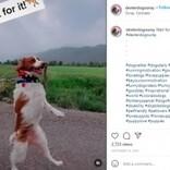 事故で前足を失った犬が2本足で歩くように「逆境は越えられる」勇気与える存在(米)<動画あり>