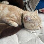 充電中? 充電切れでスヤスヤ眠る猫ちゃん