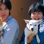 獣医学部に実在したサークル「犬部」を元に描く!青春犬ラブムービー!映画『犬部!』