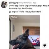 引退した警察犬に「コカイン」と呼びかけ 瞬時に仕事モードへ(豪)<動画あり>