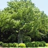 【連載】1本の木に会いに行く~観察してみると、いろんなものが見えてくる~