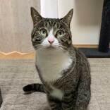 「笑った」「これは強気の訴え」 抗議するように見つめる猫の、足元を見ると?