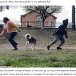 愛犬の信頼度を測るチャレンジが話題に 落ちている枝に負ける飼い主も(米)<動画あり>