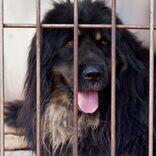 犬食文化は今もなくならず… 韓国畜産農場から食肉処理を控えた50頭を救出