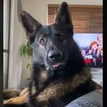 『ある言葉』を聞いた、元麻薬探知犬の反応に57万人が爆笑 「10回以上見た」