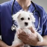 「安楽死させるよりつらい3つのこと」 獣医の告白に胸が締め付けられる