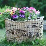 庭先を彩る鮮やかな夏の花壇特集。日差しに強くて丈夫なおすすめの人気品種をご紹介