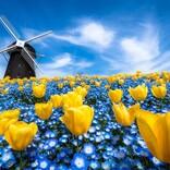 【まるでアート】青と青がかけ合わさった美しい写真にいいね続々 - 撮影された場所は?