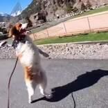 事故で前脚を失った犬 2本の脚で嬉しそうに歩く姿に笑顔が止まらない