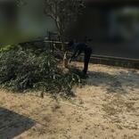 メンテ疲れでシンボルツリーのオリーブを伐採。失敗から学んだ植物との付き合い方