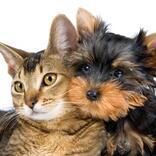 【ペット】キラキラネームも登場!犬・ネコ・鳥「名前ランキング2021」発表♪