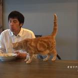 チュートリアル・徳井義実さんがYouTubeチャンネルを開設!!(雑学言宇蔵のお笑い雑学)