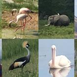 【ケニア】アンボセリ国立公園サファリツアーのガイド中に動物の写真をたくさん撮ったよ~! マサイ通信:第476回