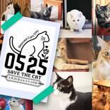 5月25日はホゴネコの日! 保護猫の命を救うキャンペーンを開催 内容は?