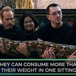 地球上で最も長いニシキヘビってどれくらい長いの?
