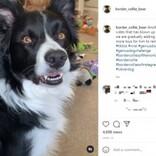 60個のぬいぐるみの名前がわかる犬 「僕よりも賢い」の声(英)<動画あり>