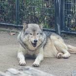 意見箱に「園内のにおいをなんとかしてほしい」 動物園の園長が、ブログで丁寧に返答