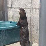 乱獲や密輸で絶滅危機! 5月最終水曜日『世界カワウソの日』に動物園・水族館がTwitterなどで啓発アピール