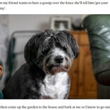 大好きなお隣さんの危機に気付いた犬 飼い主に知らせお手柄(スコットランド)