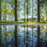 【息をのむ美しさ】雨上がりに撮った絶景写真に「近所の公園がこんなに美しいなんて」「水鏡の世界もまたキラキラですね」と絶賛の声