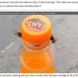 2匹のミツバチが協力してペットボトルのフタを開ける衝撃映像(ブラジル)<動画あり>
