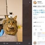 猫の上に小さい猫?きれいに並んだ奇跡の3ショット