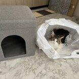 猫、大満足「お値段以上」 ニトリのペットハウス…ではなく袋に納まりドヤ顔
