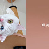 キャッチフレーズは「買わずに飼ってね」 殺処分から救われ、里親との出会いを待つ犬猫の写真動画コンテスト