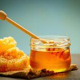 父親が息子を木に縛りつけ体罰 体に蜂蜜を塗りつけ「ハチに刺されろ」