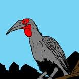 【怪鳥】謎の巨大鳥「ミナミジサイチョウ」についてマサイ族に聞いてみた結果 → もしも発見したらオレらはこうする / マサイ通信:第481回