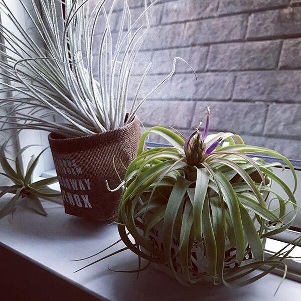 初心者でも簡単に育てやすい観葉植物