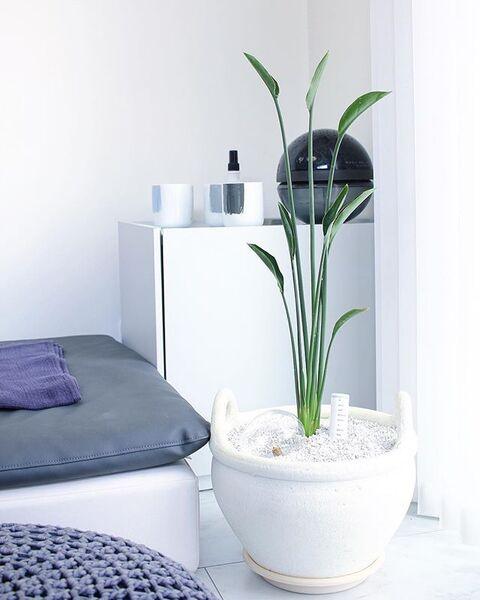 大型でおしゃれな人気の植物