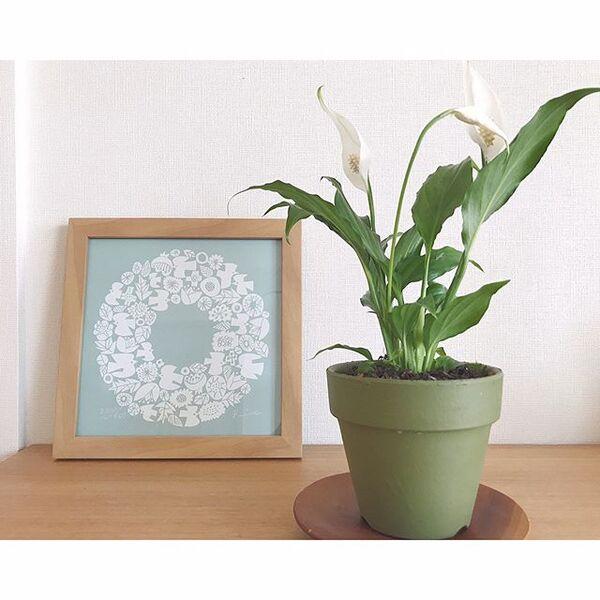 純白のお花で人気のスパティフィラム