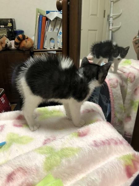 自分の姿を初めて見た子猫