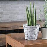 キッチンに観葉植物を置くならどこが正解?風水で手軽に運気アップを狙おう