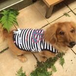 愛犬と楽しく暮らす家を訪問。アイデア&DIY次第で、専用スペースや庭がなくてもHAPPY!