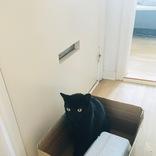 「どうか捨てないで」お気に入りの段ボール箱を守りたい黒猫が無言のアピール