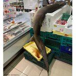 全長3メートルのシュモクザメがスーパーに登場 販売者と目撃者を直撃