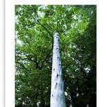 大宮エリー、初の写真作品集「SACRED SPACE」「SHASTA」が6月23日発売! 様々なパワースポットを撮影し自ら監修!