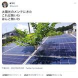 桑の木の生命力に驚き! 半年ぶりに太陽光パネルのメンテに来たら木が生えていた