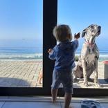 頼れるベビーシッター! 階段を上ろうとする赤ちゃん すると子犬が…?