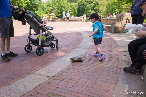 NYC セントラルパークで遊ぶ子供