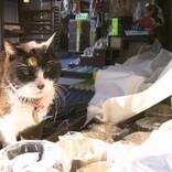 今夜放送『岩合光昭の世界ネコ歩き』 浅草の神社や寄席、老舗で個性的なネコに出会う