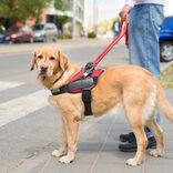 盲導犬同伴拒否の場所、飲食店が最多 日本盲導犬協会が実態調査
