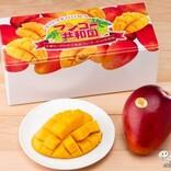 【夏のギフトに】南国の生果が最北端でも! 実旬の『宮古島マンゴー』が自宅で食べられる!