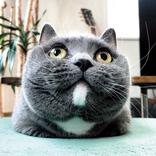 応募数1万2000の頂点に! 『anan猫さま大賞2021』グランプリは?